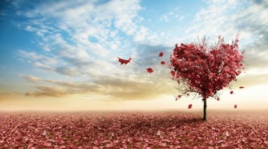 autumn-love-meghann-andreassen