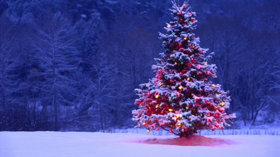 meghann-andreassen-christmas-tree